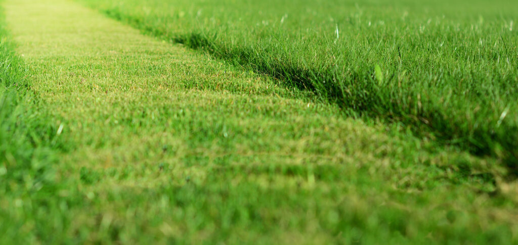 Mowing Turfgrass