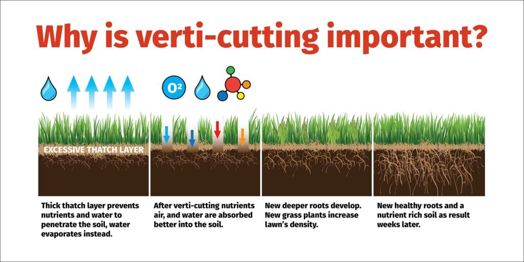 Why verticutting important